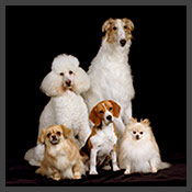 Animal Images-Prestigious Pet Photography